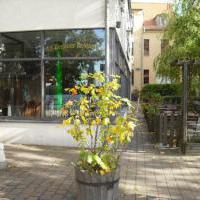 """Alt-Berliner Restaurant """"Zum Dampfschiff"""" in Berlin auf bar01.de"""